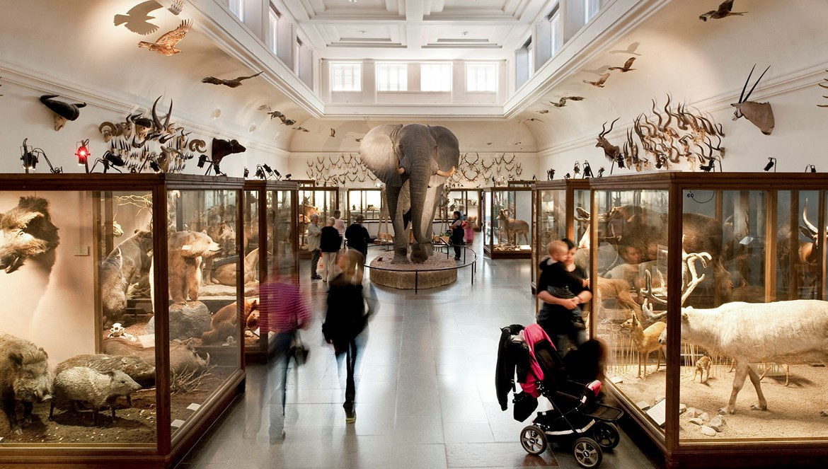 Exhibition hall at the Gothenburg Natural History Museum