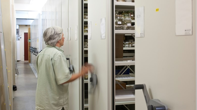 A curator opens a locker to the collections