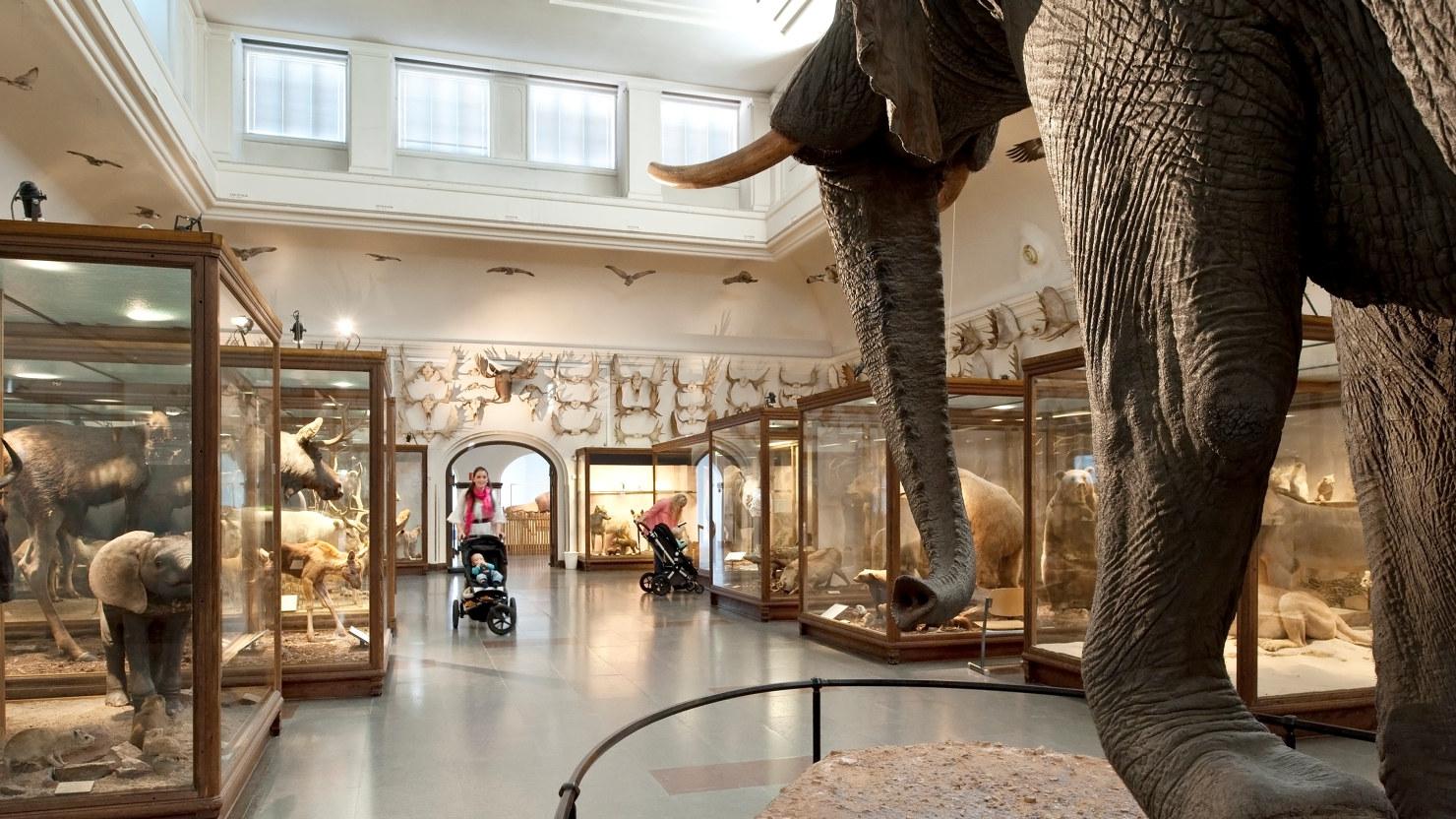Mammal Hall, Gothenburg Museum of Natural History